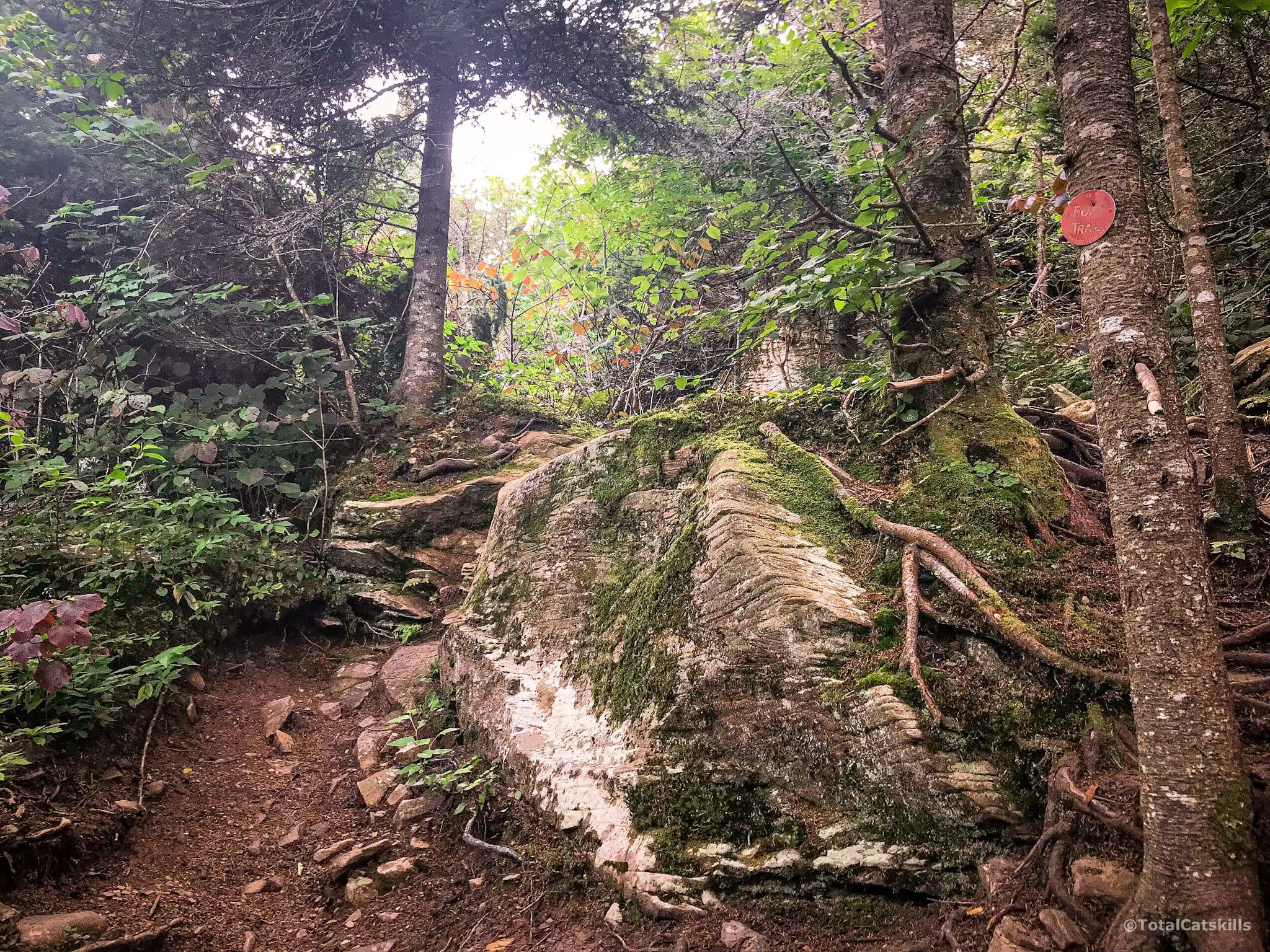 rock outcrop, trees