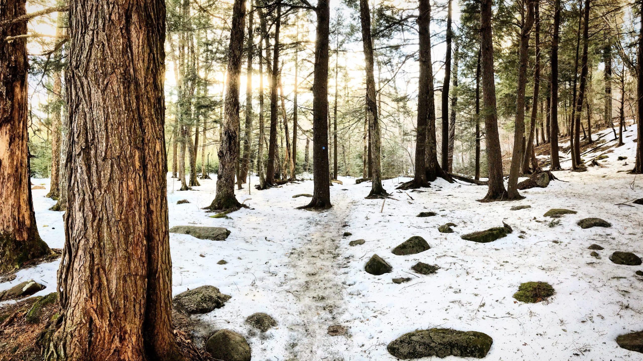 Denning Woods