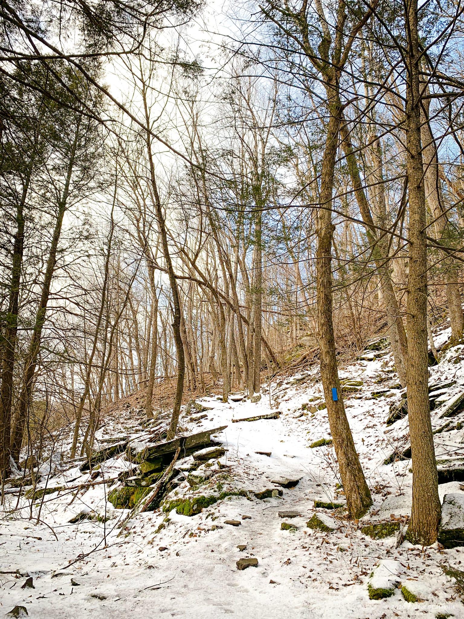 woods, snow