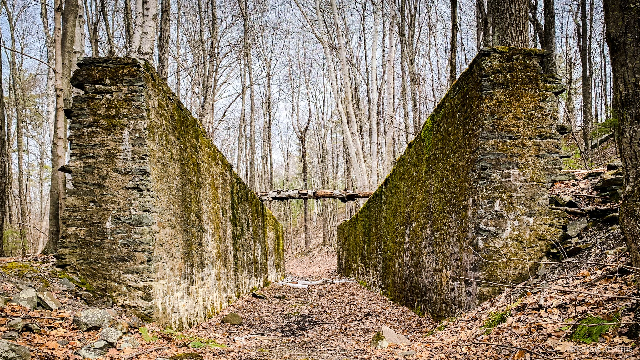 two walls in the woods