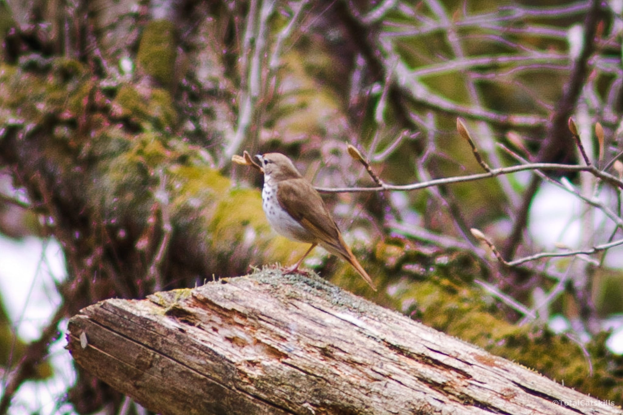 bird perched on old log