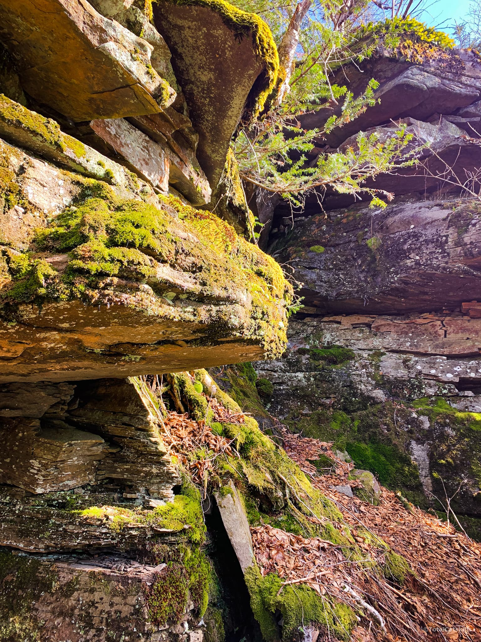 Rock face with moss