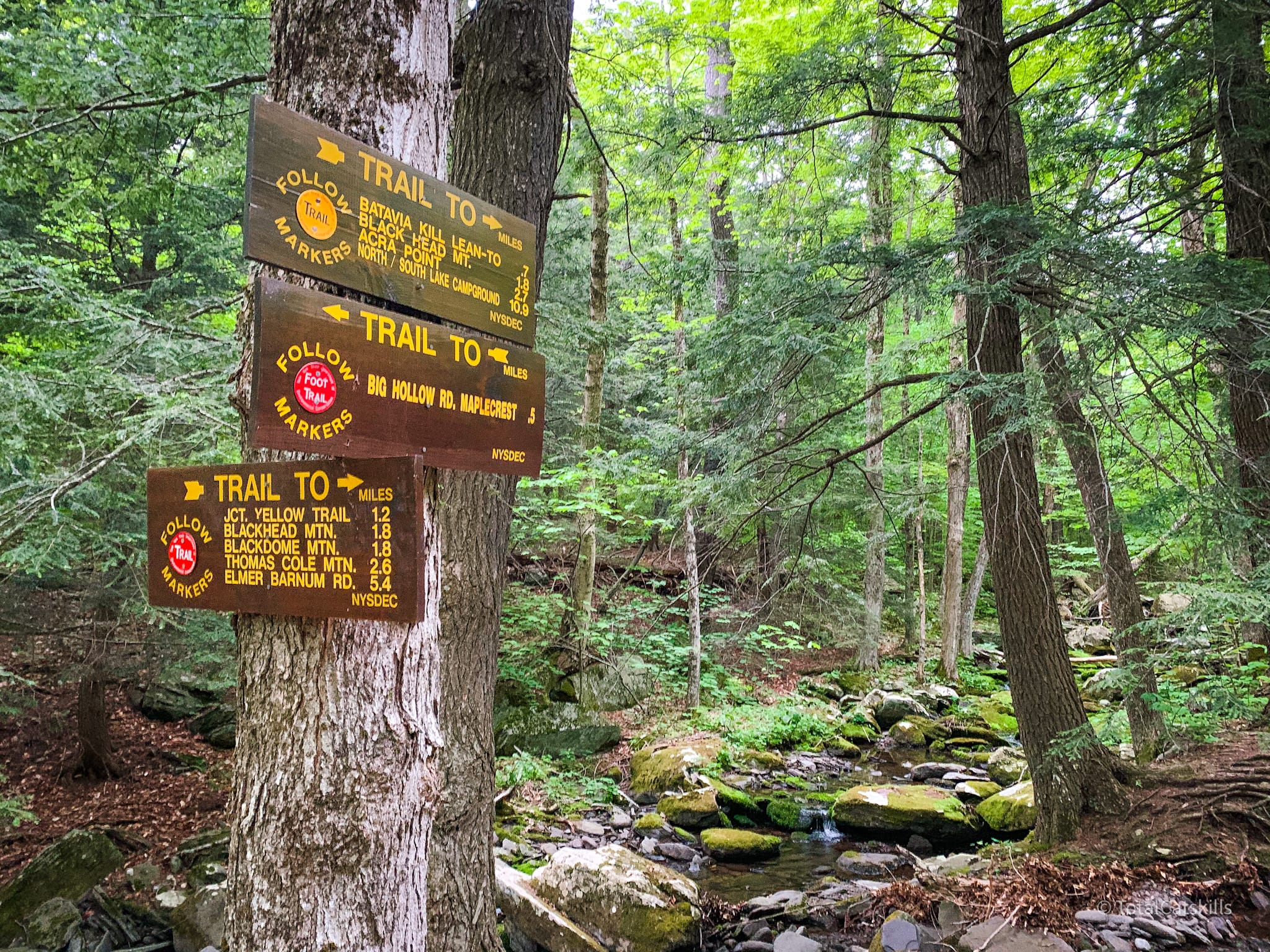 trail signs on tree