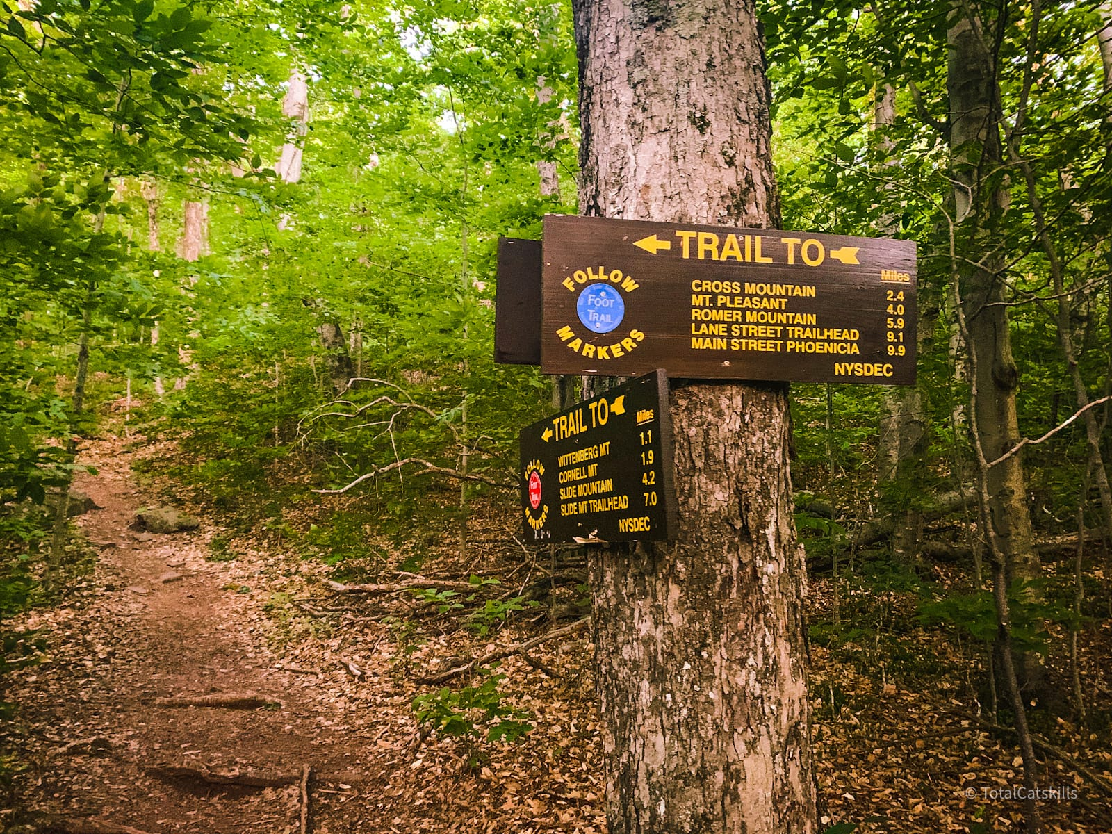 forest trail signs