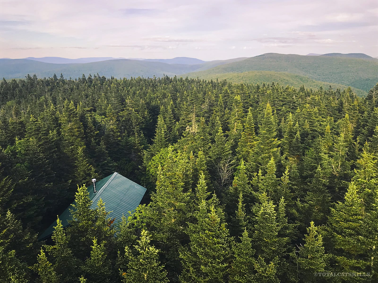 fire tower view across conifer forest