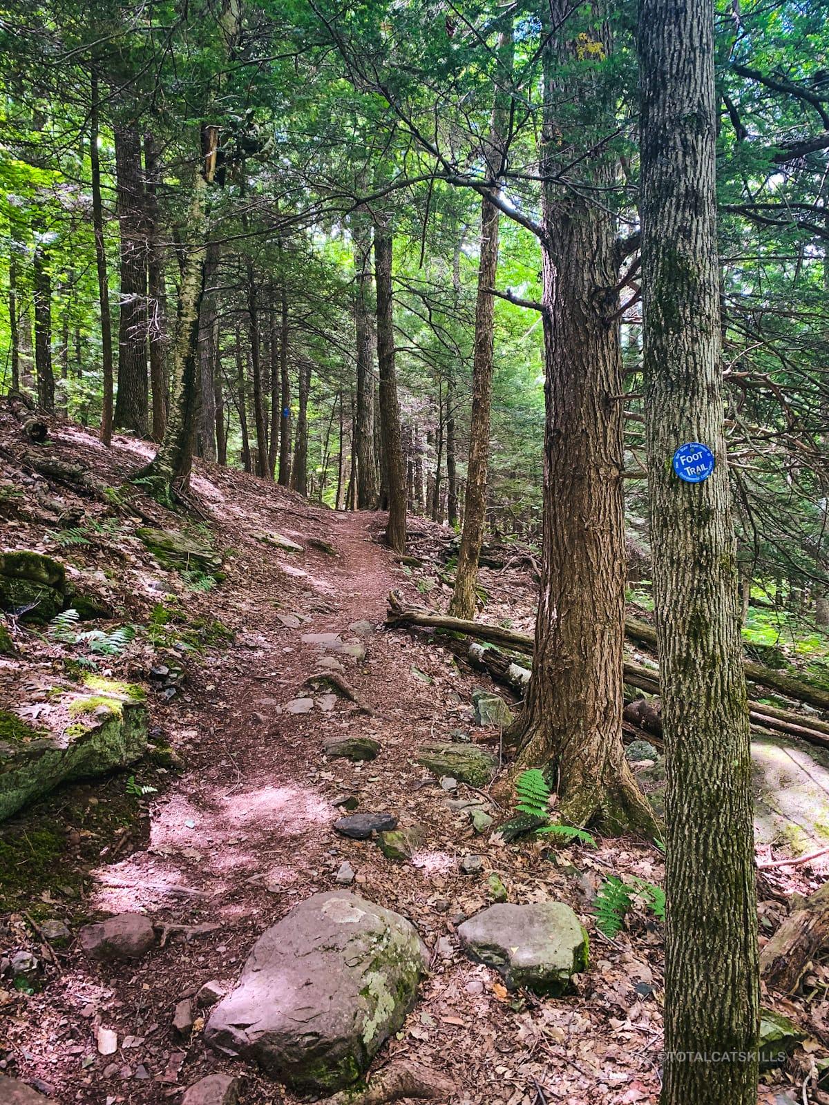 hemlocks on hiking trail