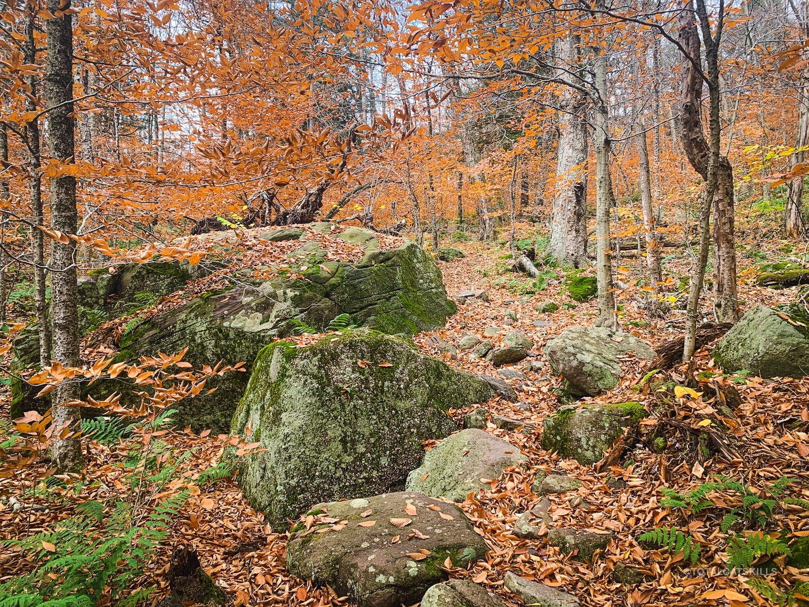 boulders on trail
