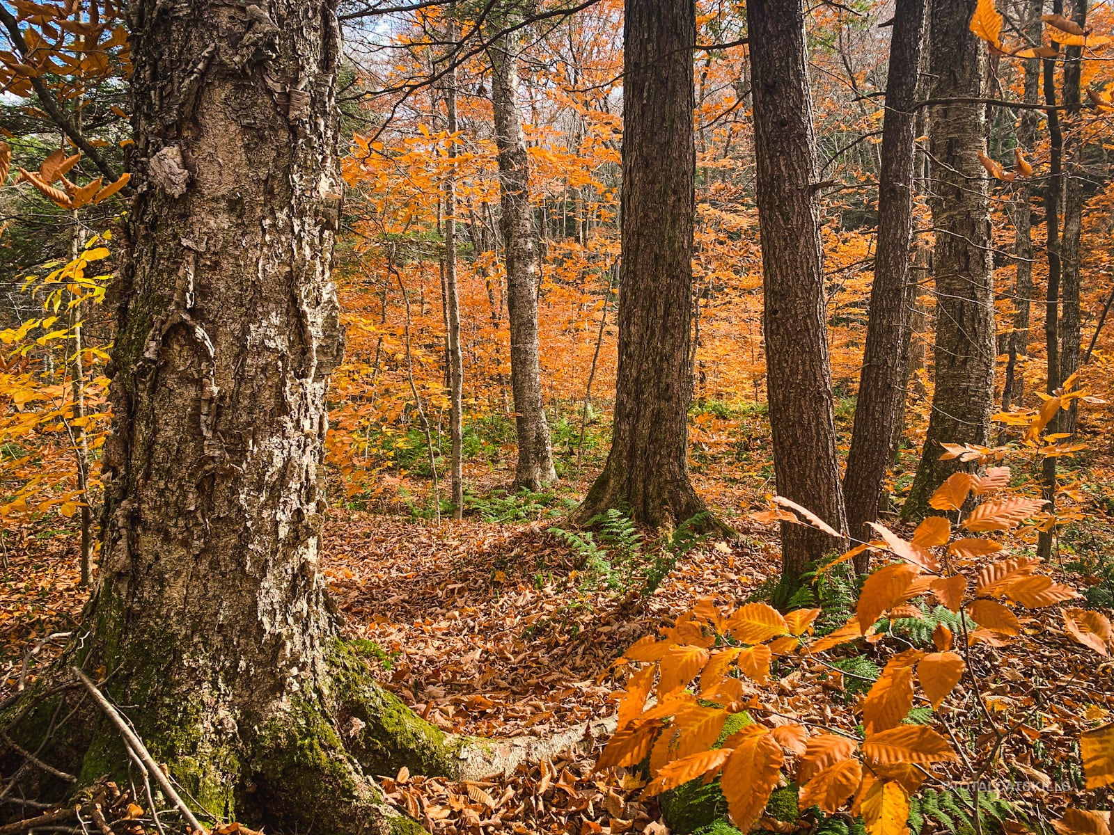 fisherman's path fall forest scene