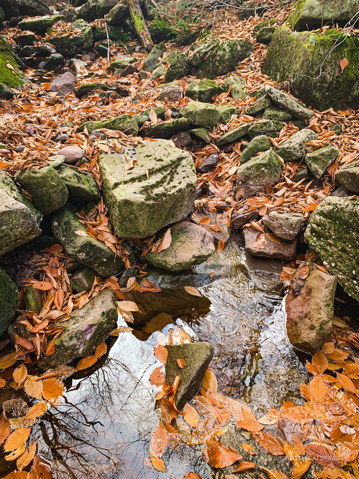 wet rocks and leaves