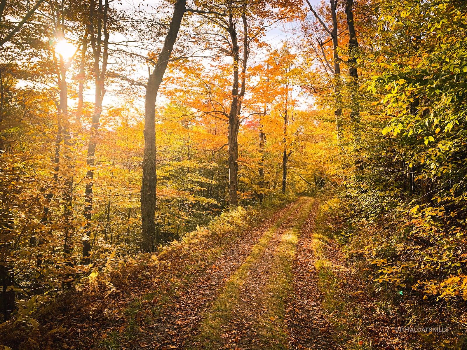 autumnal trail