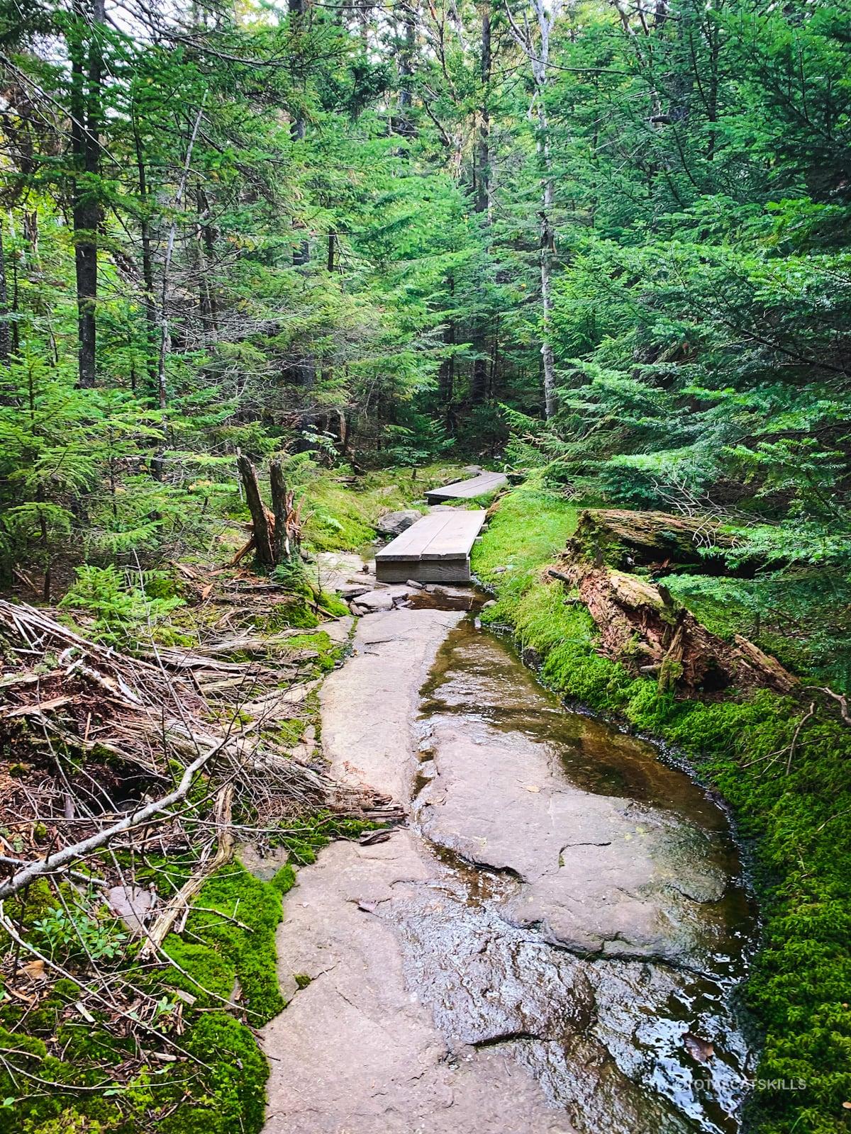 rocky woods trail
