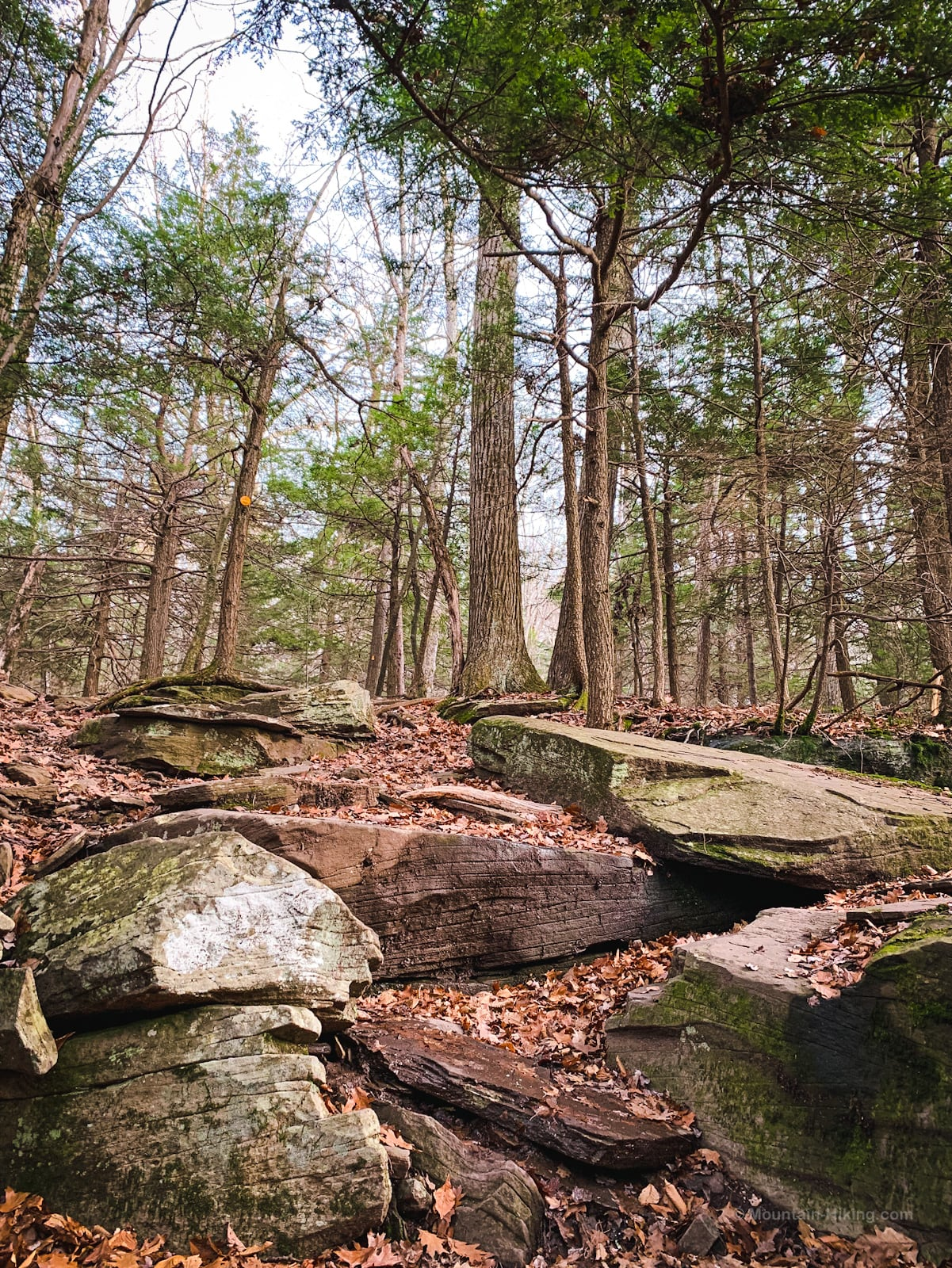 rock ledge in woods