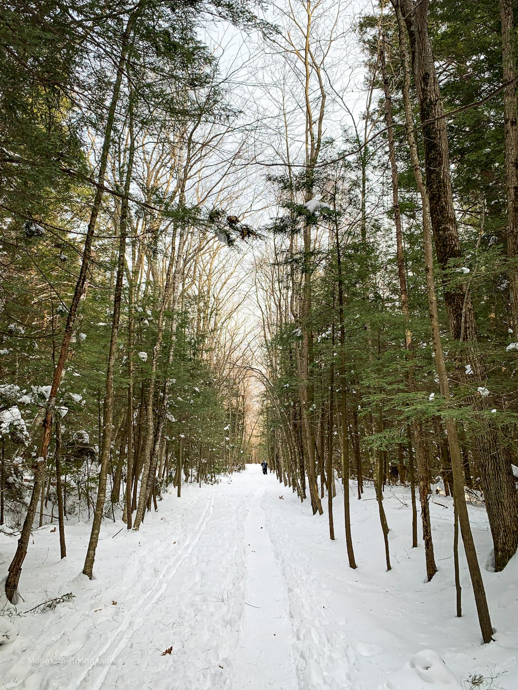 snowy trail in winter woods Kaaterskill Rail Trail