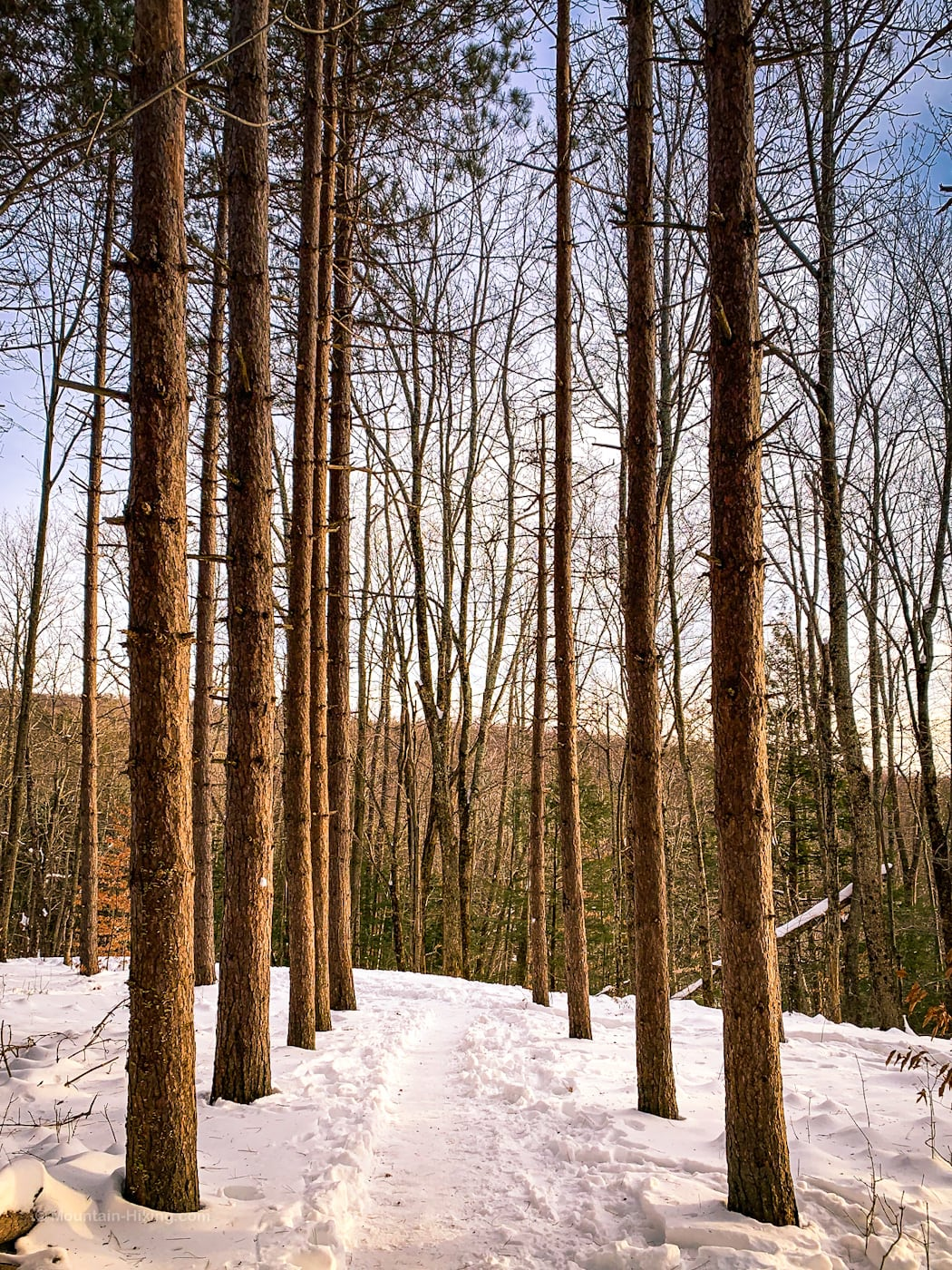 grove of trees in snow