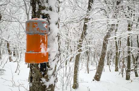 orange canister affixed to tree trunk