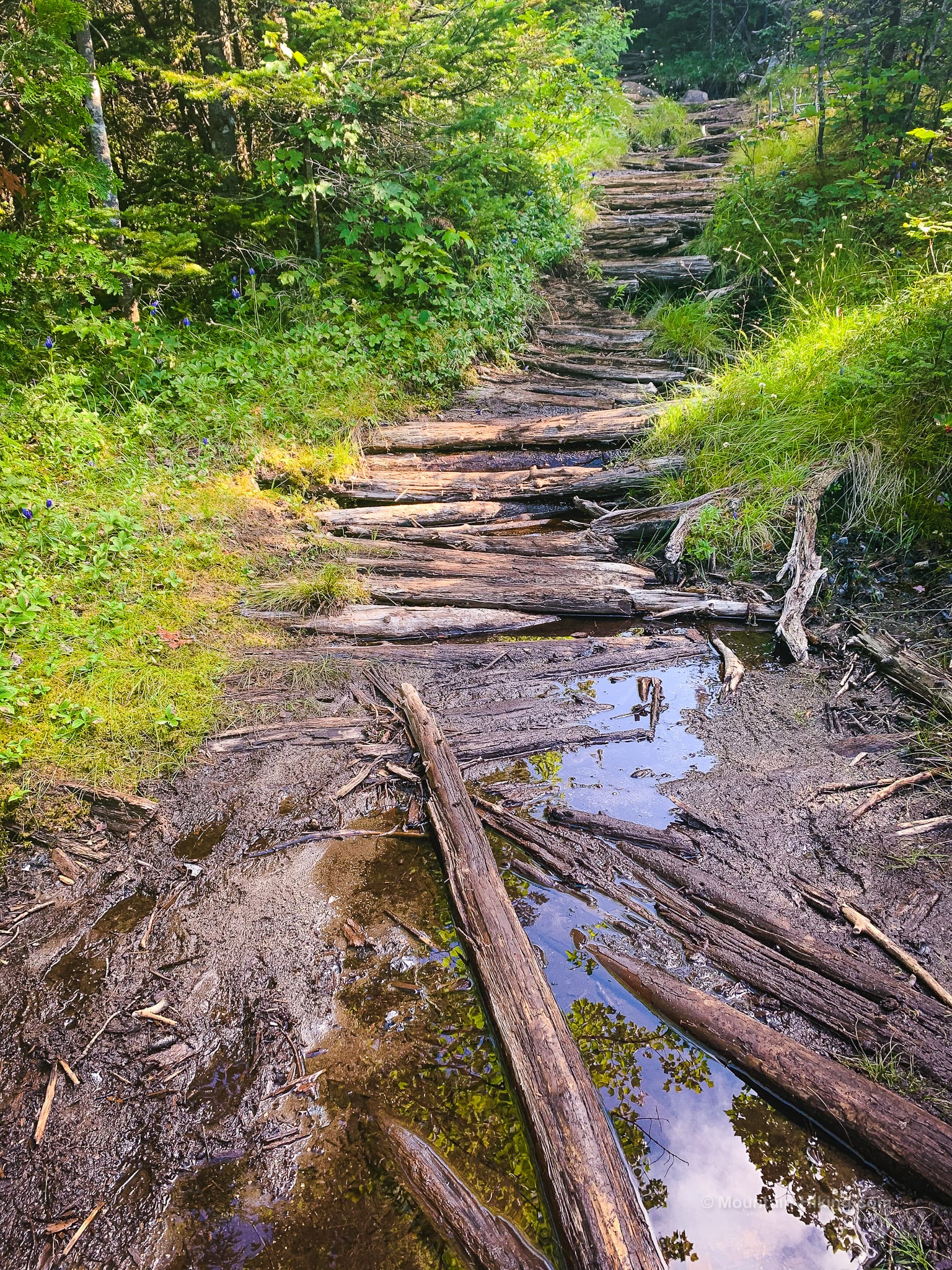 logs over muddy trail section