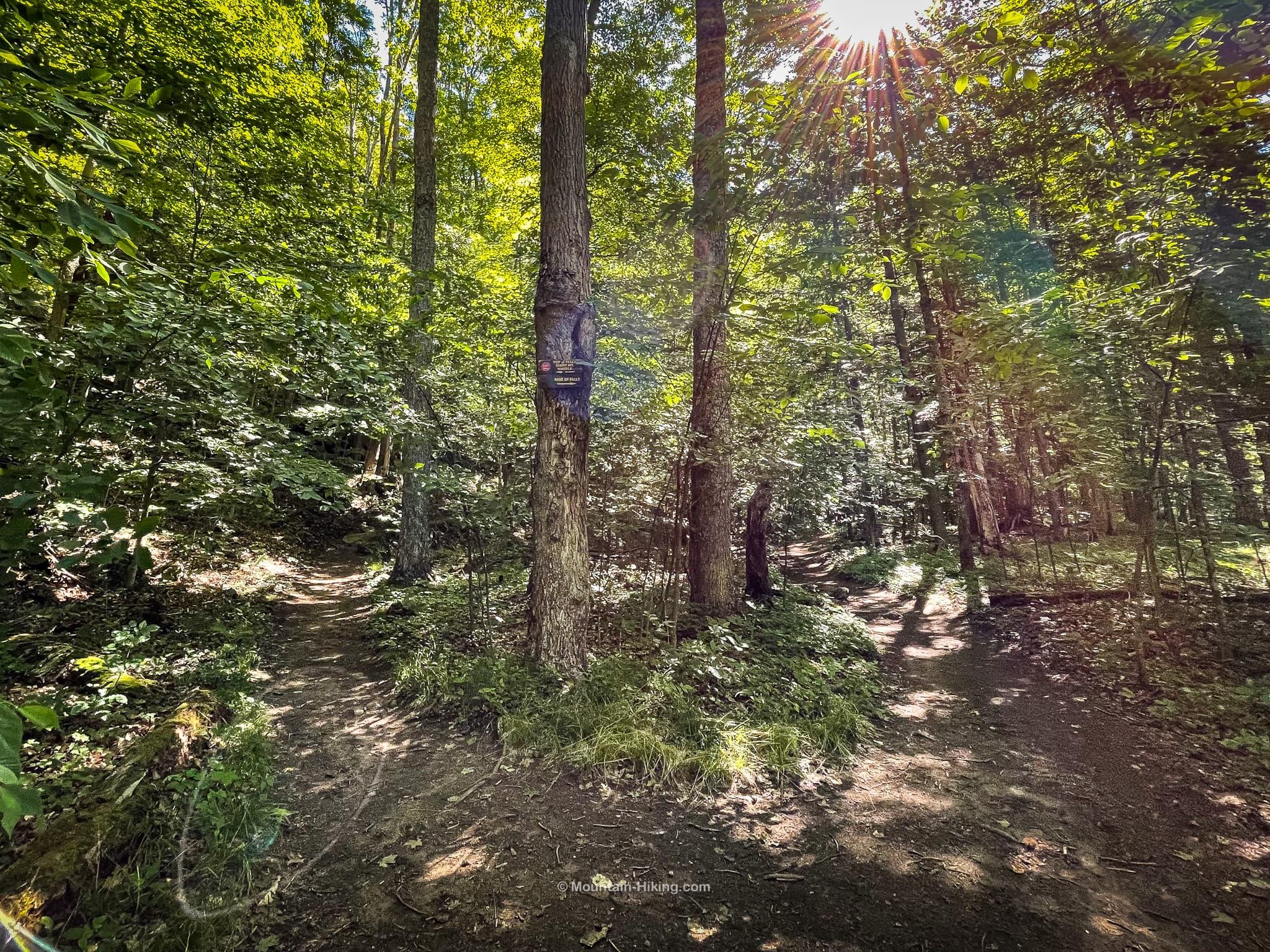 roaring brook falls trail junction