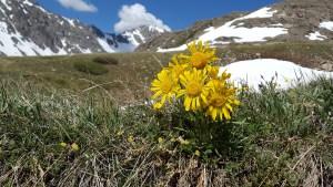 Flowers are abundant while hiking