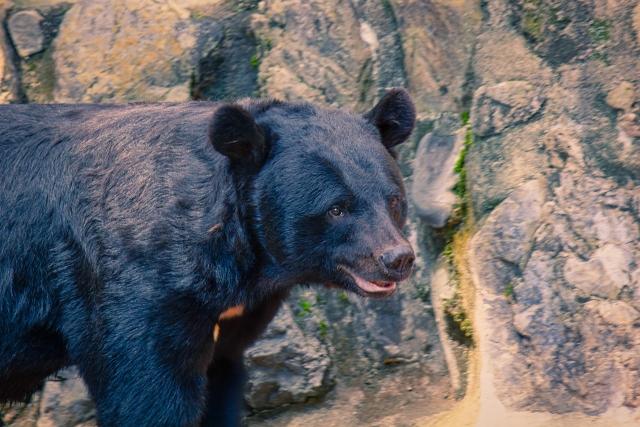 クマに会う方法