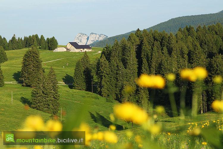 foto di un alpeggio dell'Alpe Cimbra