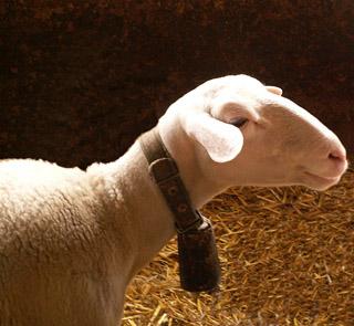 La Sonnaille, the sheep barnmascot