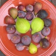 violet-sepor-peters-honey-emerald-strawberry-hunt-improved-celeste-tiger-14