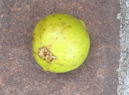 Lemon (3)