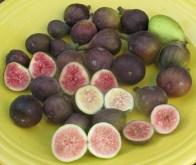 27-figs-mt-etna-brooklyn-white-lsu-purple-black-madeira-2