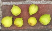 lemon-blanche-15