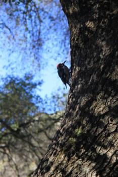 Campsite was full of hyperactive birds