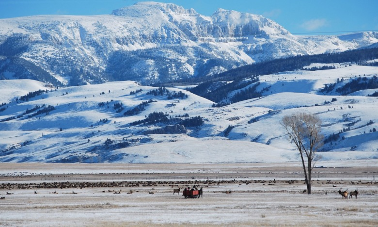 Photograph courtesy of National Elk Refuge
