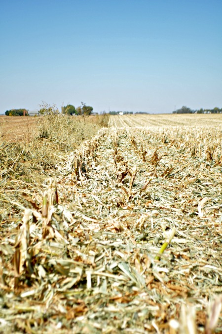 Iowa Soybean fields, www.mountainmamacooks.com