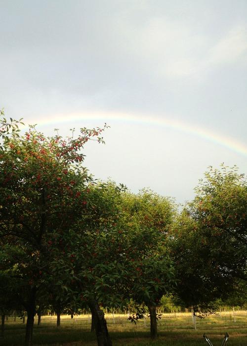 Michigan Cherry Tour Rainbow, #stateofgreattaste