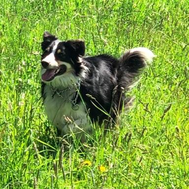 Kobi running in the grass