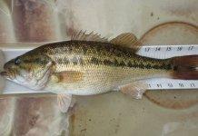 New invasive species found in Va. lakes – The Enterprise