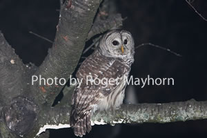 Birds of the Powell, Clinch, and Holston River Watersheds