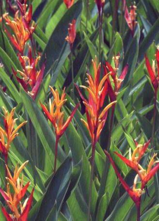 botanicgardens-singapore_lah_7484