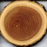 Log Cabin Log Type Oak