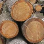 Log Cabin Log Type White Pine