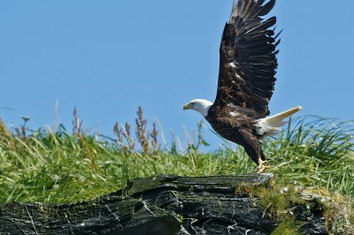 eagle_launch