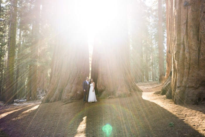 Tender Sequoia National Park Elopement | Bergreen Photography