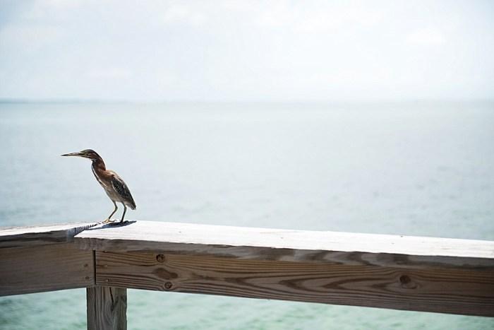 11 Abaco Bahamas Honeymoons