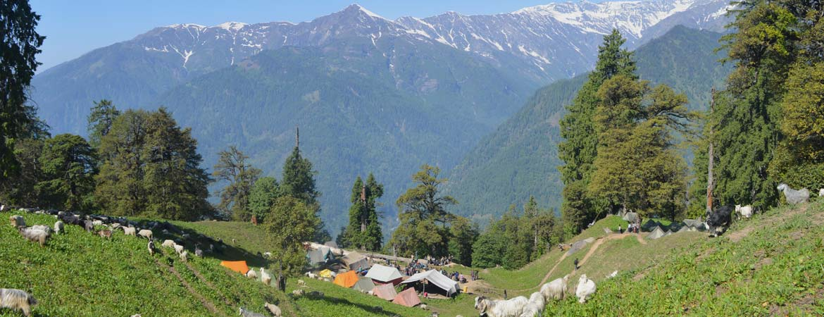Adventure Camp in Manali, Bhrigu Lake and Trekking in Manali, Silver Oak Camp
