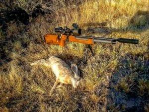 hunting jackrabbits