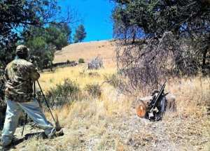 baxter walton pcp hunting ground squirrels