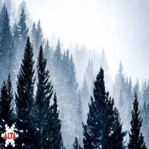 Alta Dec 28