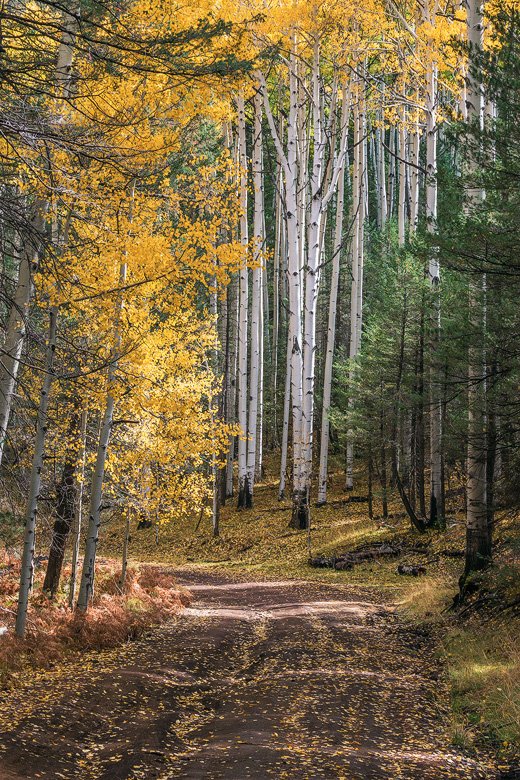 coconino national forest fall