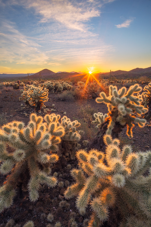 sonoran desert sunrise morning