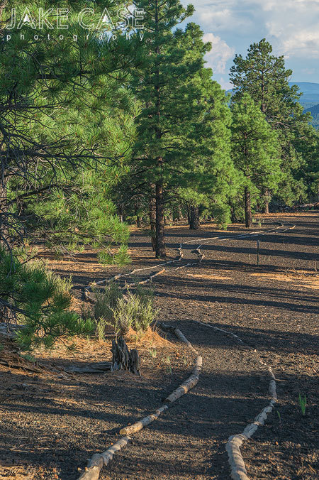 winding trail forest