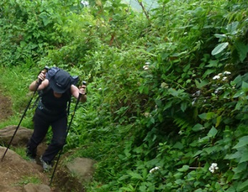 Hiking trails in Mount Elgon -Uganda Safari News